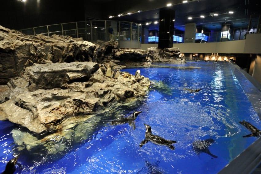 すみだ水族館のペンギンプール。関東最大級の大きさ