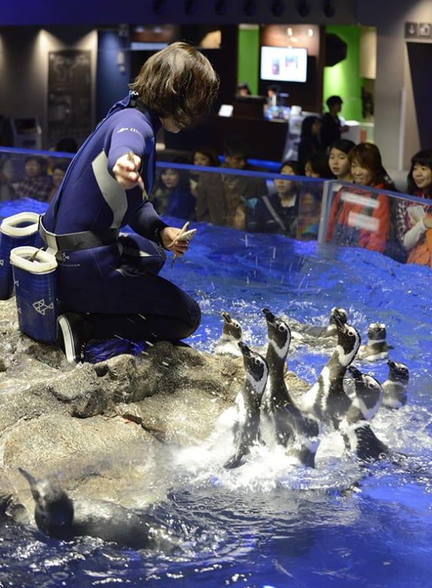 すみだ水族館では「ごはんの時間」(エサやりタイム)を見学できます。