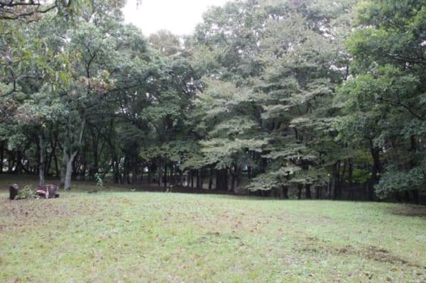 加曽利貝塚は「不思議の森」発見がいっぱい!