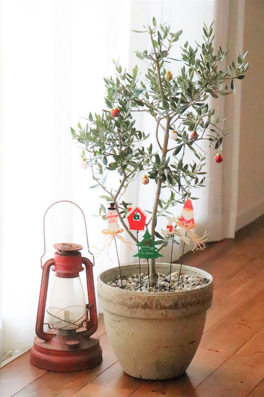 出し入れの手間がないクリスマスツリー。普段のインテリアに取り入れている観葉植物にオーナメントを飾るだけ。