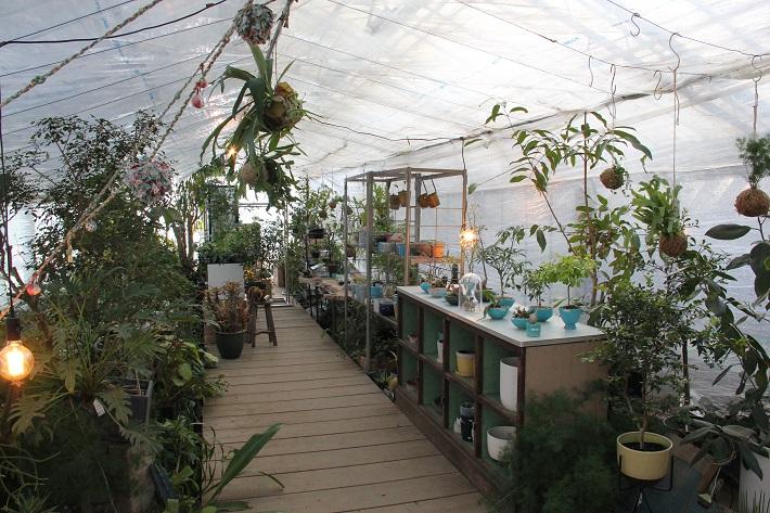 個性豊かなお店が集まる「KAWAGUCHI SHINMACHI」の「greenshare」では観葉植物を扱っています。