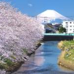 千葉県木更津市の矢那川公園に咲く桜と富士山の絶景