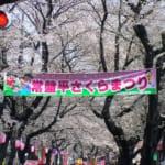 千葉県松戸市の常盤平さくら通りのさくらまつり