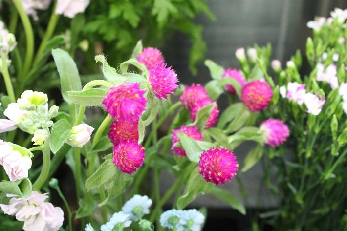 ドライフラワーに向く植物「センニチソウ」