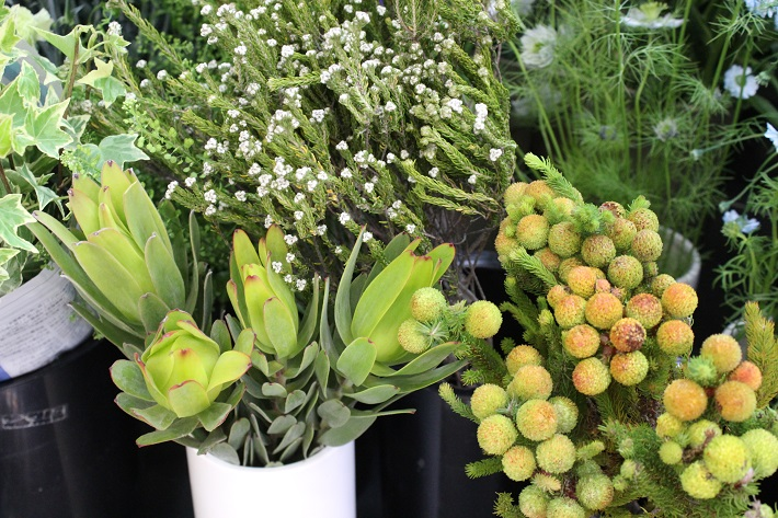 ドライフラワーに向く植物「ワイルドフラワー類」