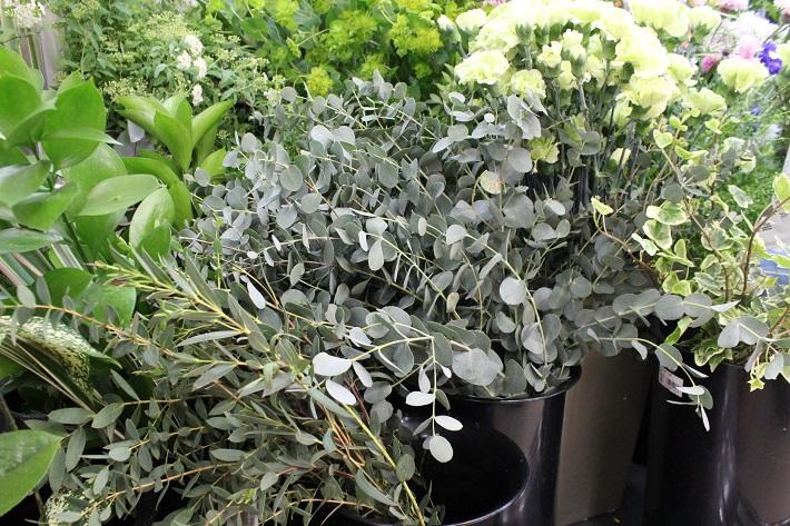 ドライフラワーに向く植物「ユーカリ」