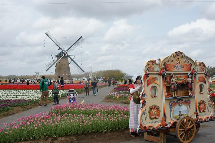 佐倉チューリップフェスタ2020オランダ風車とオランダオルガン