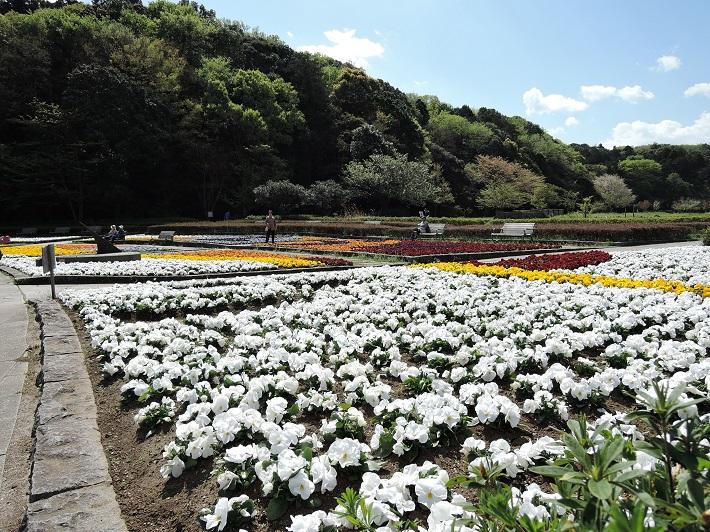 広大な敷地を誇る21世紀の森と広場は豊かな自然に息づくさまざまな植物や虫が観察できます