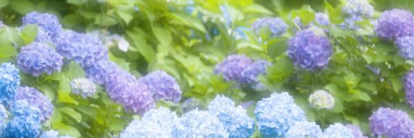 梅雨から初夏におすすめ 関東の花の名所2019