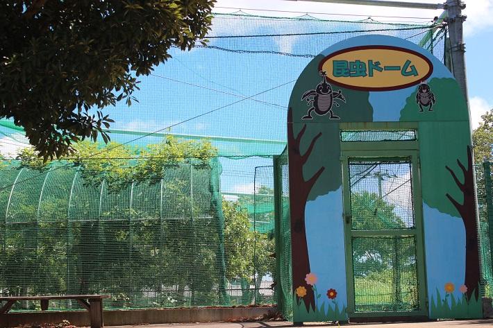 千葉県長柄町の昆虫ドームの木の上や根本にはたくさんのカブトムシ