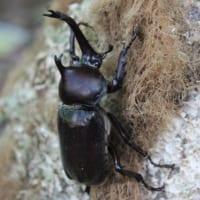 昆虫ドームでは、カブトムシを見付けるのに大人も子どもも夢中