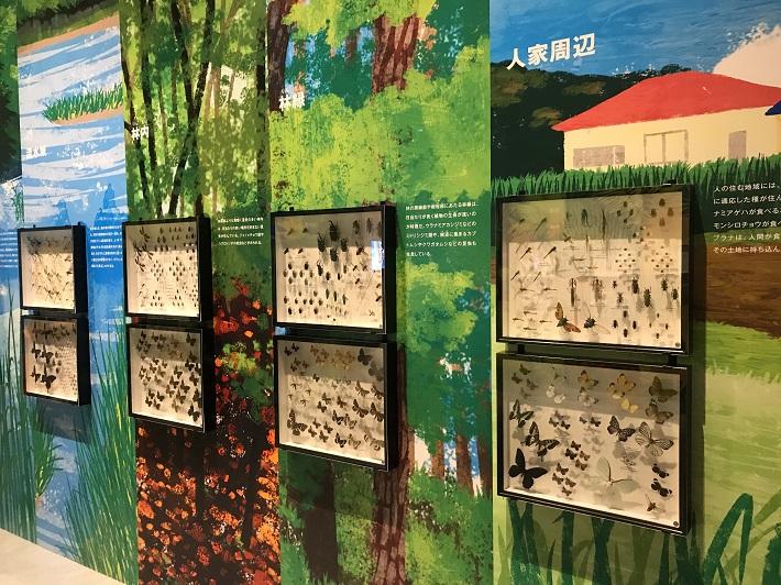 特別展「昆虫」に展示してある標本はおよそ5万点
