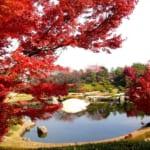 埼玉県越谷市の日本庭園花田苑では紅葉時期に美しい楓などが楽しめる人気スポットです