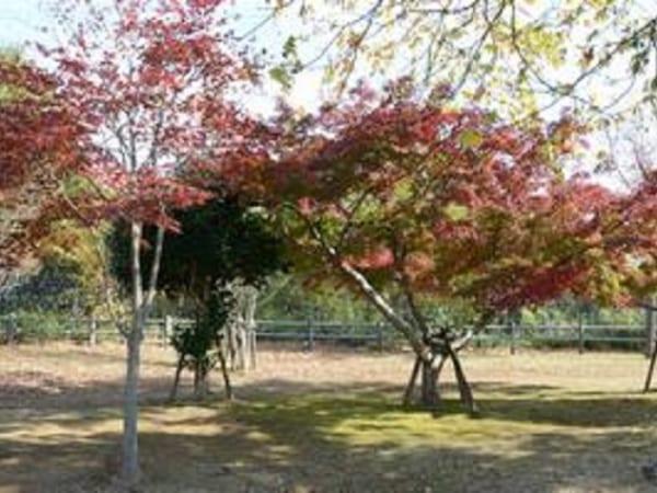 千葉県柏市の戸張地区公園は紅葉の時期に美しいもみじを鑑賞できます
