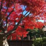 千葉市美浜区の県立幕張海浜公園日本庭園見浜園は紅葉の季節にライトアップされます