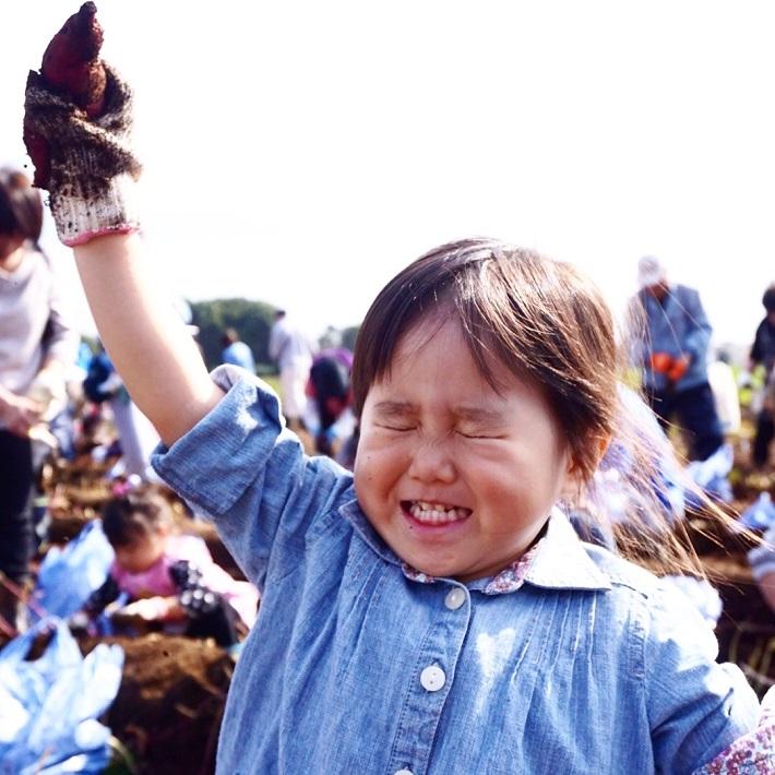 保育園や幼稚園の芋掘り遠足で子どもが大量のさつまいもを持ち帰ってきます