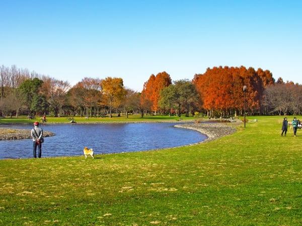 葛飾区の水元公園はおすすめの紅葉スポットです