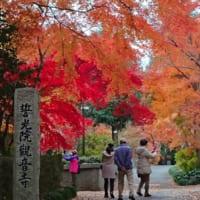千葉県柏市の逆井駅から徒歩15分のところにある観音寺は紅葉とボタンが見せる絶景が見事な隠れた名所です