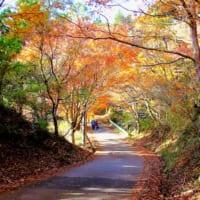 千葉県市原市の養老渓谷と梅ヶ瀬渓谷はハイキングしながら紅葉狩りを楽しめる人気の紅葉名所です