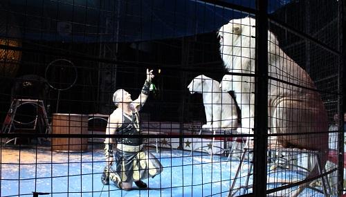 木下大サーカス ホワイトライオンと調教師