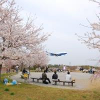 成田市さくらの山は千葉県で人気の桜の名所です