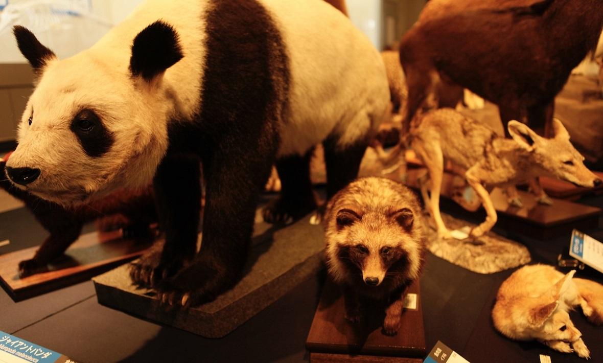 千葉県立中央博物館の展示物