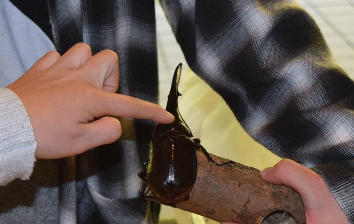成田山紅葉まつり大昆虫展の様子