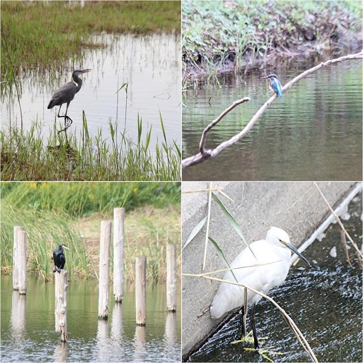 葛西臨海公園で見られる鳥類たち