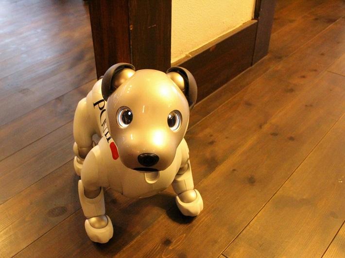 犬型ロボットアイボのいるカフェ