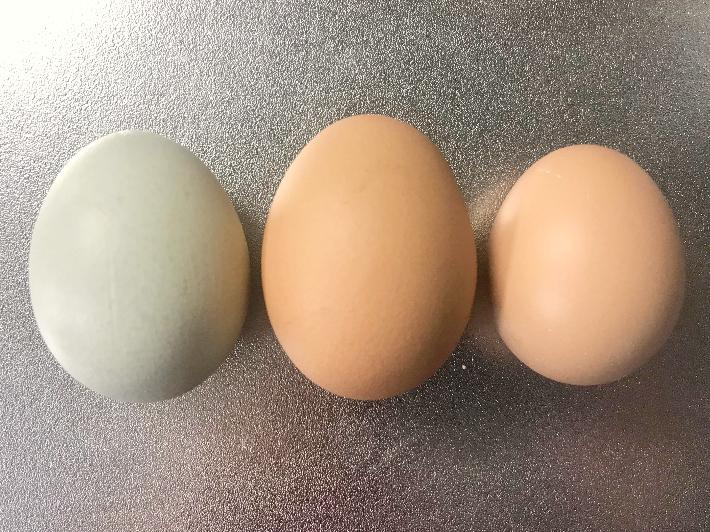 奈良たまご卵3種