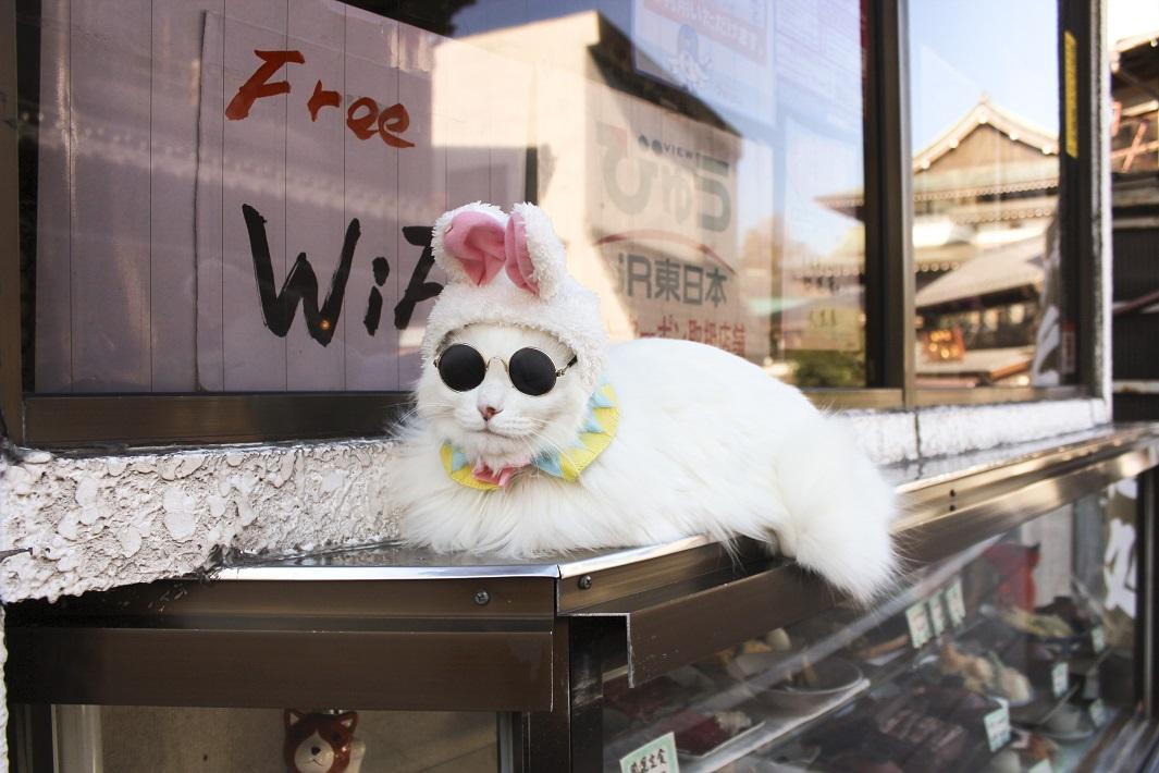成田山の猫りりちゃん