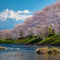 富士山「春、桜」 撮影/多田惠治