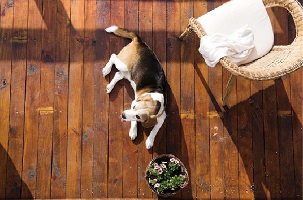 愛犬との暮らしを考えたリフォーム