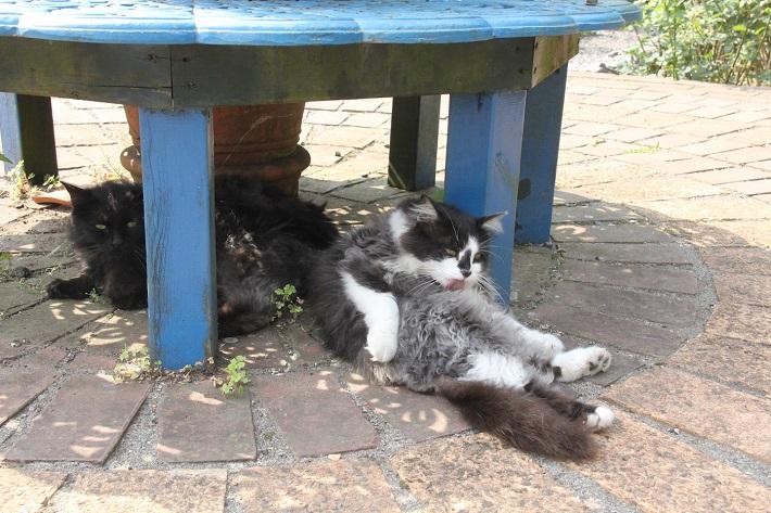 ベンチの下でくつろぐ猫たち