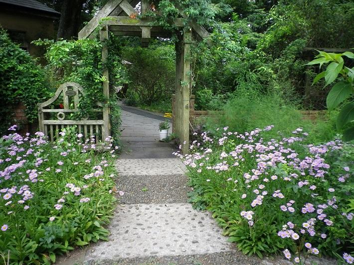 ブルーデージーが美しい庭園