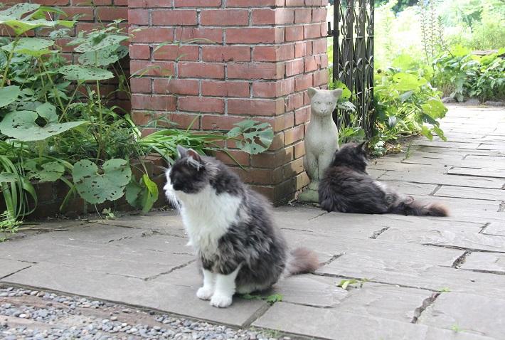 お客を待つ猫