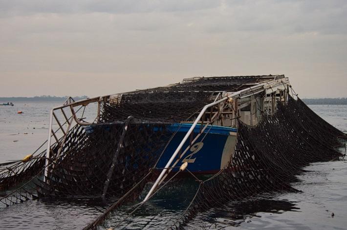 浮き流し式の摘採
