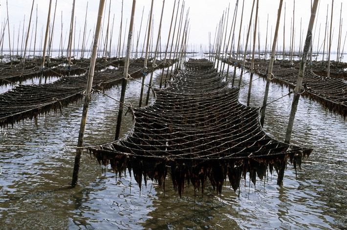 船橋で行われる支柱柵式