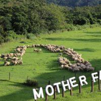 マザー牧場の羊文字アマビエ