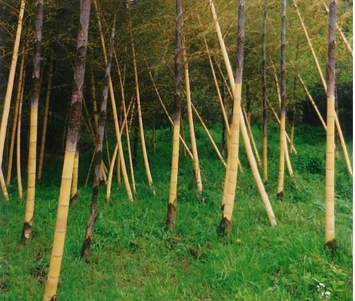 成田の黄金の竹林では「黄金たけもの」も名物に